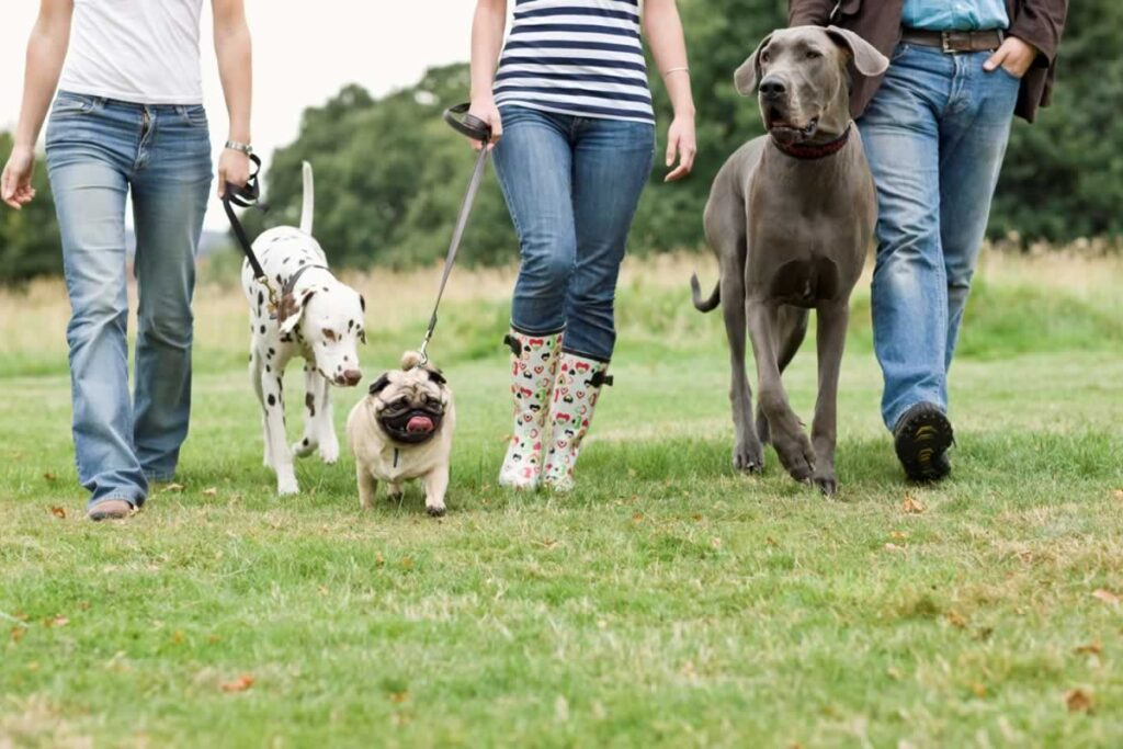 Socializing Your Pug Puppy - Keep Her Happy And Active