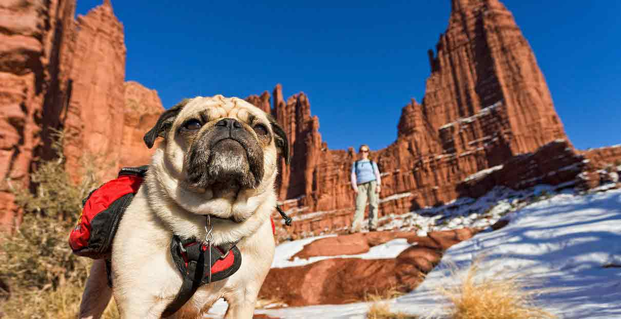 This Pug Hikes Mountains