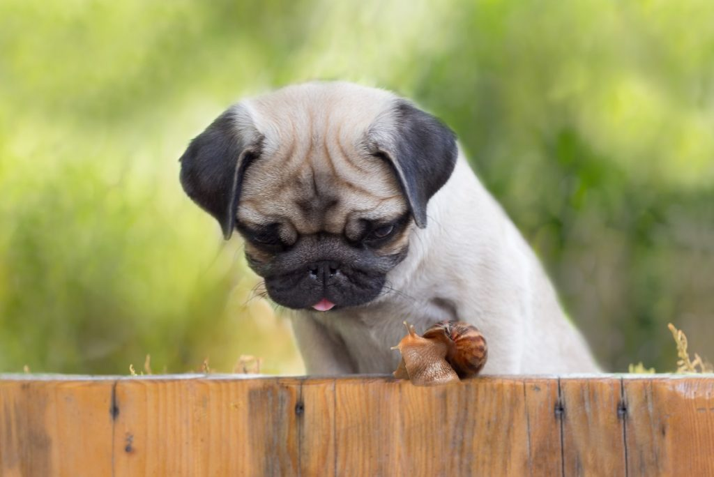 Common Myths About Dog Feeding