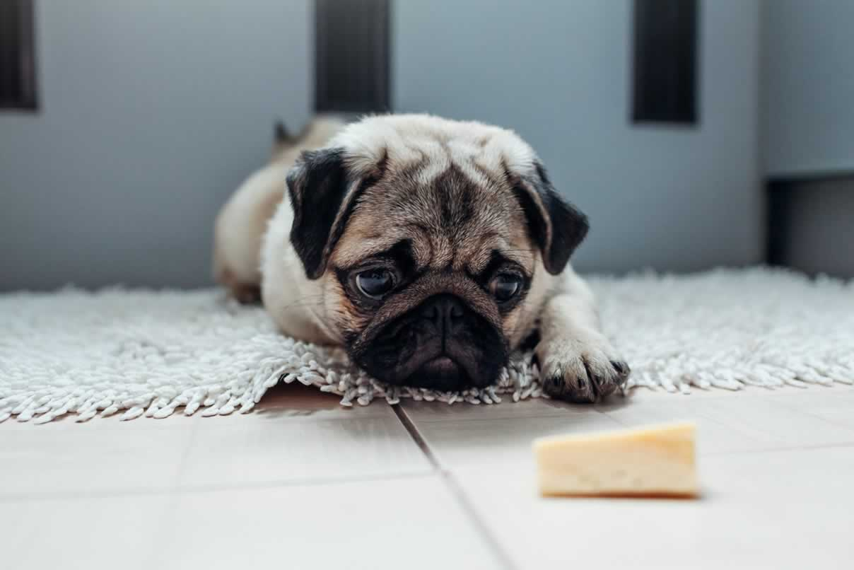 How To Tell If Your Dog Is Lactose Intolerant?