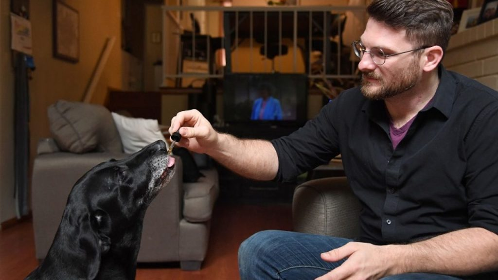 Is CBD Oil Safe For Dogs?