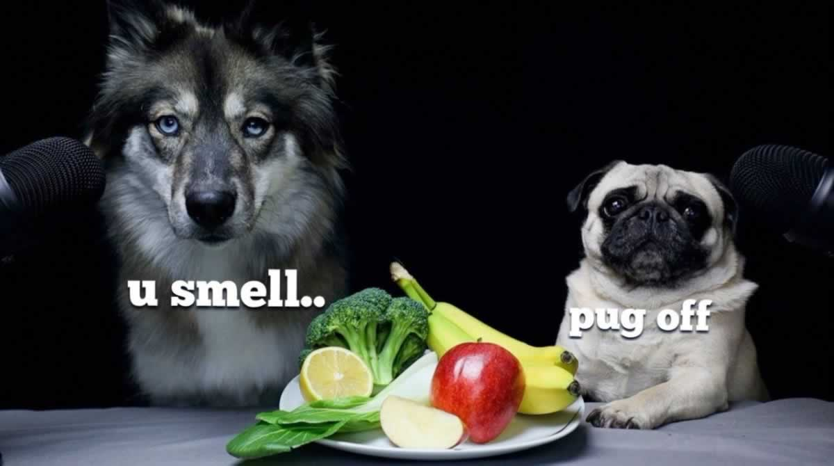 Toxic Foods For Dogs And Cats